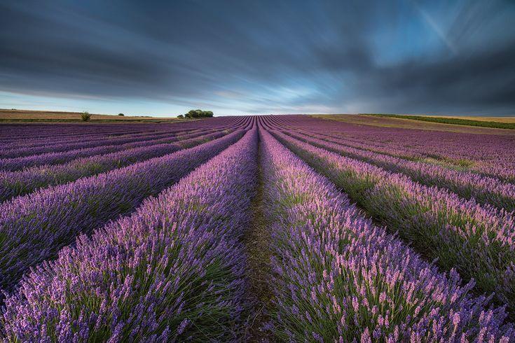 lavender fields forever by Mirek Galagus, via 500px