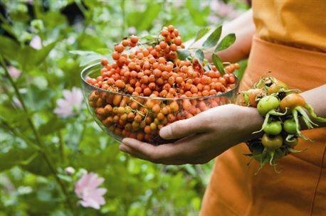 Säilö puutarhan sato talteen. Hyödynnä myös pihlajan- ja ruusunmarjat. Rose hips and rowan berries. / Kuva/pic: Ullamaija Hänninen