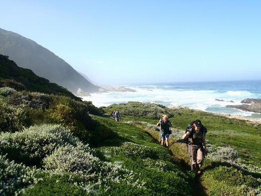 Experience the Otter Trail in South Africa – South African Tourism