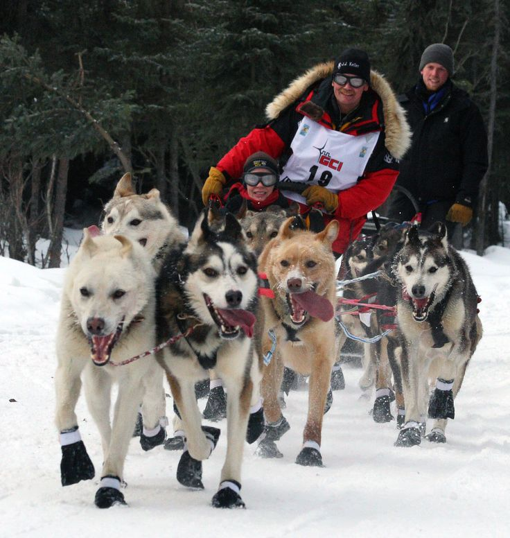 """""""The 44th Iditarod Trail Sled Dog Race has been forced to move its starting location 360 miles north from Willow, Alaska, to Fairbanks, Alaska, due to low snow conditions."""""""
