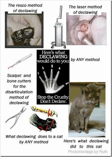 """animal testing should be stopped Animal experimentation differs in relevant respects from other animal rights  issues  the """"stop vivisection"""" eci failed to live up to the expectations of a  hybrid forum  european governance of animal experimentation, of which we  will discuss."""