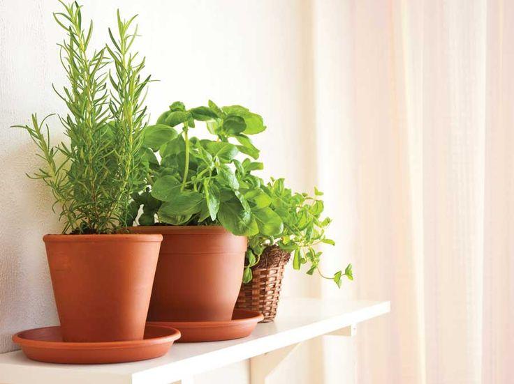 Tips Choosing Herbs for an Indoor Herb Garden by indoor herb garden