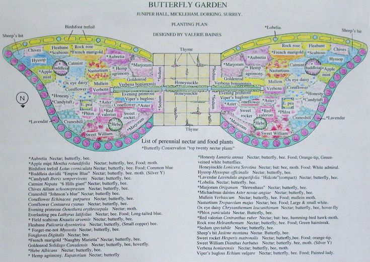 Butterfly Garden Ideas small butterfly garden good ideas in article about providing shelter Butterfly Shaped Garden Plan A Bit Elaborate But It Helps Give Ideas Of Plants To Use