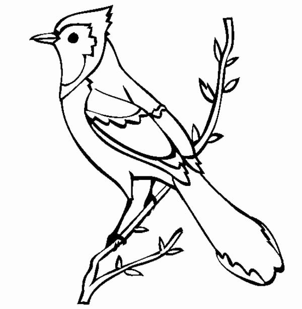 Blue Jay Coloring Page Inspirational Beautiful Blue Jay Bird Coloring Page Beautiful Blue Jay Bird Coloring Pages Blue Jay Coloring Pages