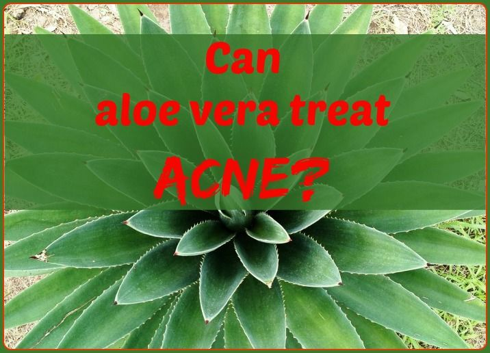 Is aloe good for acne? See the benefits of aloe vera capsules for acne. Find the best aloe vera supplements and where to buy aloe vera online.