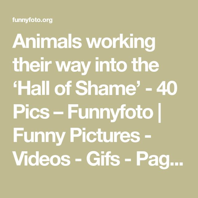 Animals working their way into the 'Hall of Shame' - 40 Pics – Funnyfoto | Funny Pictures - Videos - Gifs - Page 20