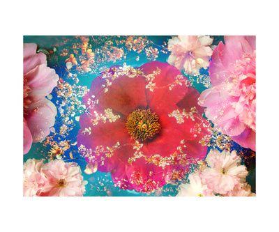Roze bloemen (Kleurenfotografie) Kunstposters bij AllPosters.nl