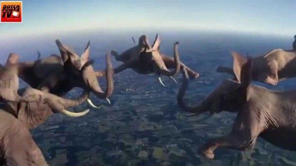7 Impossible animal stunts and flying elefants