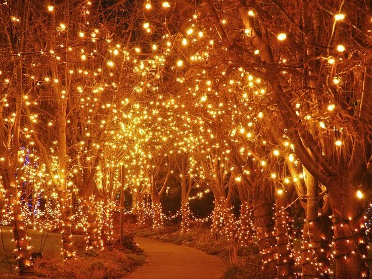 1000 Ideas About Lighted Trees On Pinterest Invitation