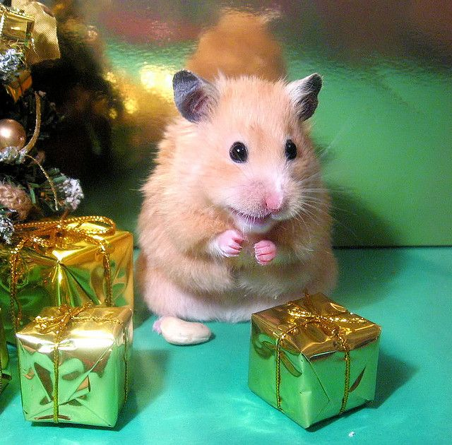 Unexpectedly Funny Things to do with Hamsters When You're Bored ~ The Ark In Space