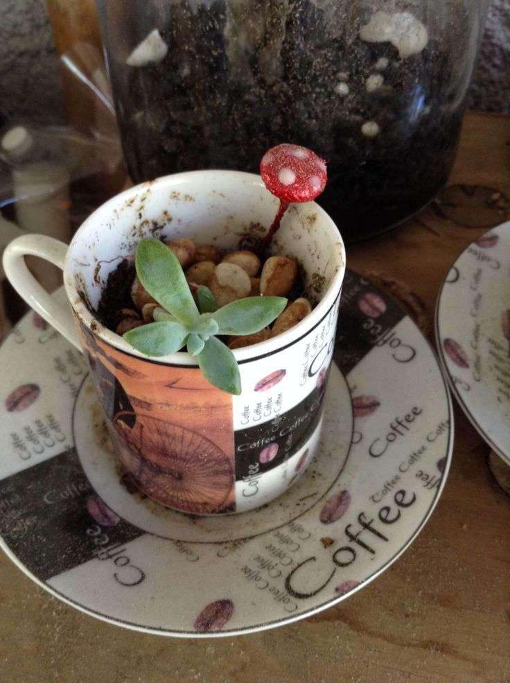 Button mushrooms and tiny tea cups