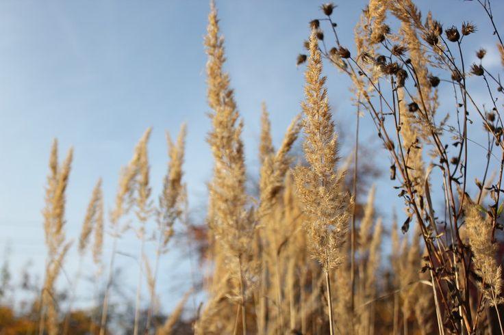 Autumn grass by Tomáš Zúbrik on 500px