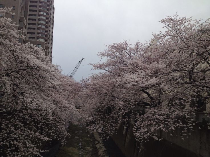 @waseda  @ kanda river