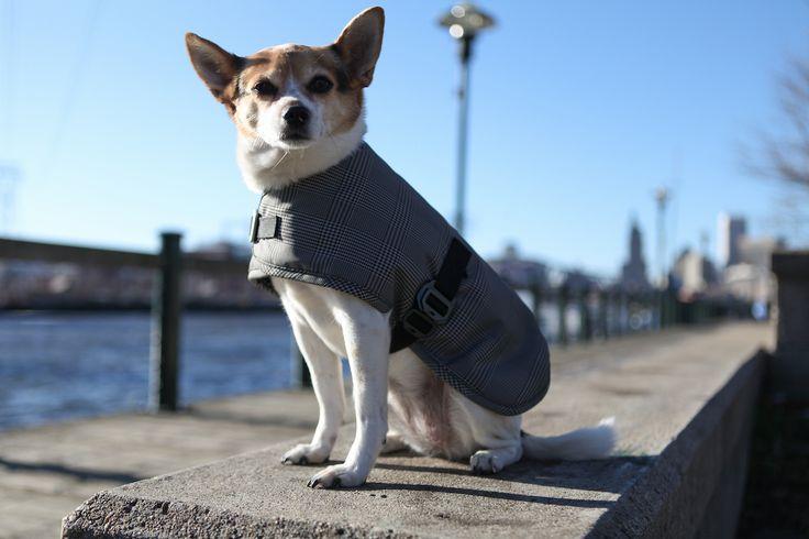 Cleverpup Waterproof Dog Coats