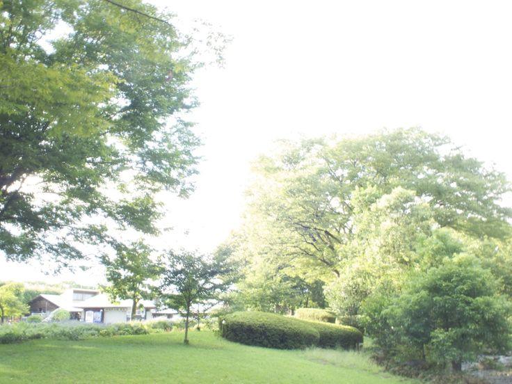 相模原公園 1秒写真