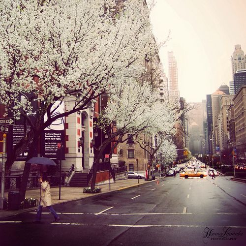 NYC.: Cherries Blossoms, Heart, Favorite Places, New York Cities, Nature Pictures, Trees, The Cities, Spring Bloom, Newyork