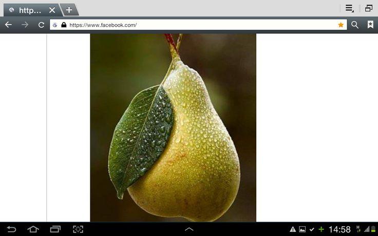 Receta para preparar Repelente natural con instrucciones e ingredientes de Samuel  Salcedo en Cocina33