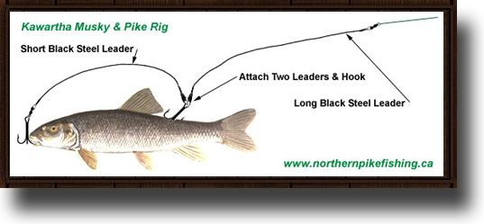 Northern Pike Fishing Tips & Techniques