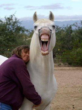 Horses Big Hugs And A Smile On Pinterest