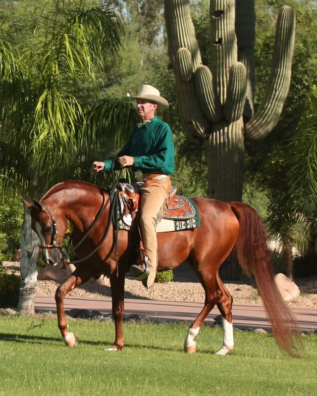 Billed as largest Arabian Horse Show in the world - WestWorld complex in North Scottsdale attracts thousands each year.