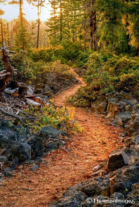 ~Pacific Crest Trail~ Rogue River - Siskiyou National Forest, Oregon - by Sue Newman