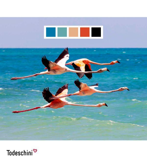 Los colores de la naturaleza son encantadores, y estos flamingos en el mar de Mayapo, La Guajira, son muestra de ello. En Todeschini no hay límites, tú escoges el tono que se ajusta a tu personalidad. Visita nuestro show room #Diseñodeinteriores #Decoración #Todeschini #ambientes #mueblesamedida #arquitectura #colombia
