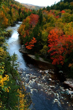 Fall colors on Cape Breton Island in Nova Scotia.