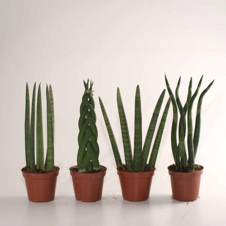 13 best Pflanzen für dunkle Ecken images on Pinterest | Dark, Plants ...