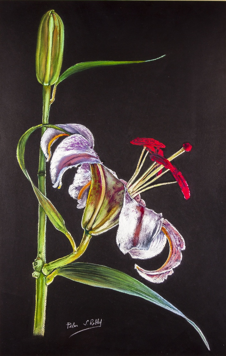 Pilar S. Robles. Lilium. Pastel. 71x50. En venta