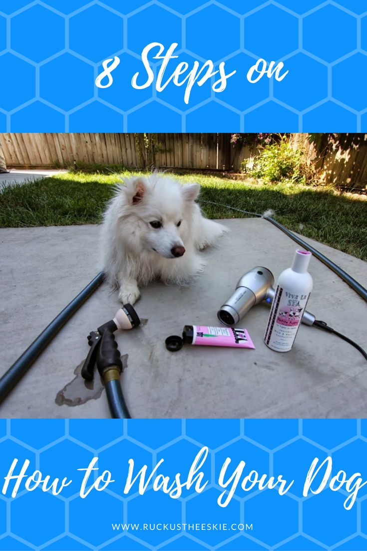 8 Steps on How to Wash your Dog, Bath time with Dog Bath and Dog Grooming