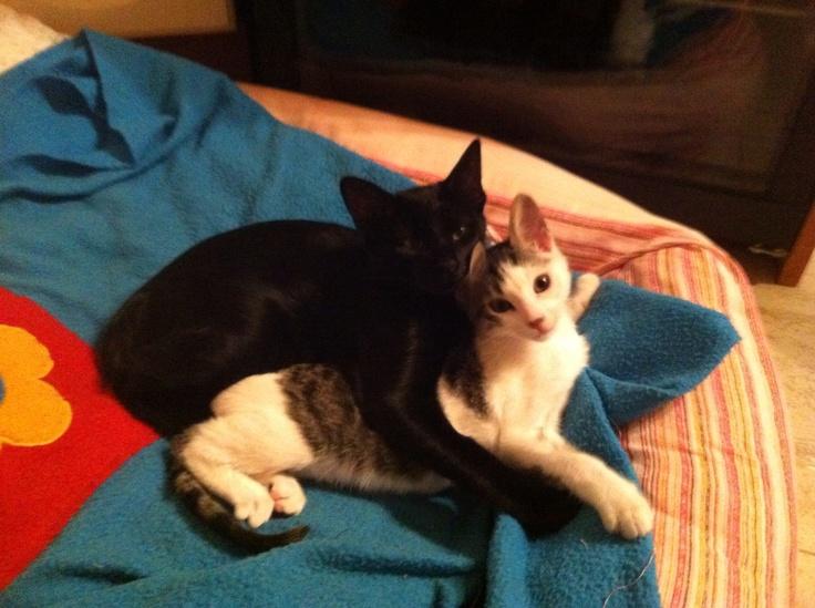 Mis gatitos preciosos