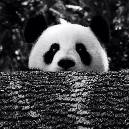 Hello! Cute Panda!
