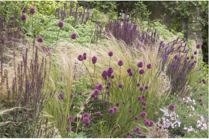 she used a simple, pared-down palette of sedum, salvias, origanum, erigeron, and Stipa gigantea to create structure, texture, and color all year.