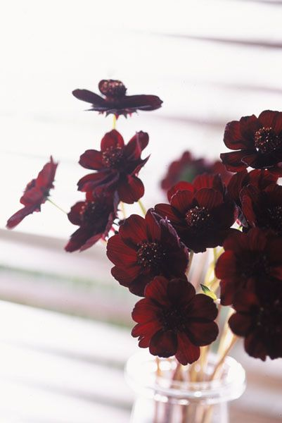 Marsala colored flowers.