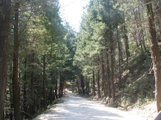 Taking the road from Zia to Asclipeion/Kos