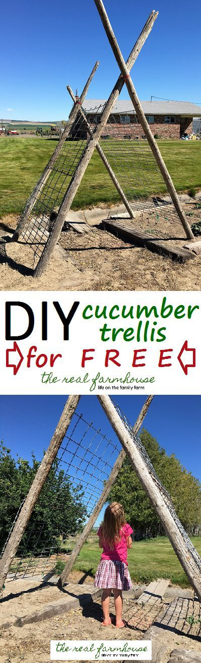 DIY rustic cucumber trellis for FREE. complete tutorial with picture. Awesome DIY