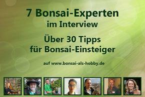 7 Bonsai-Experten - über 30 Tipps!