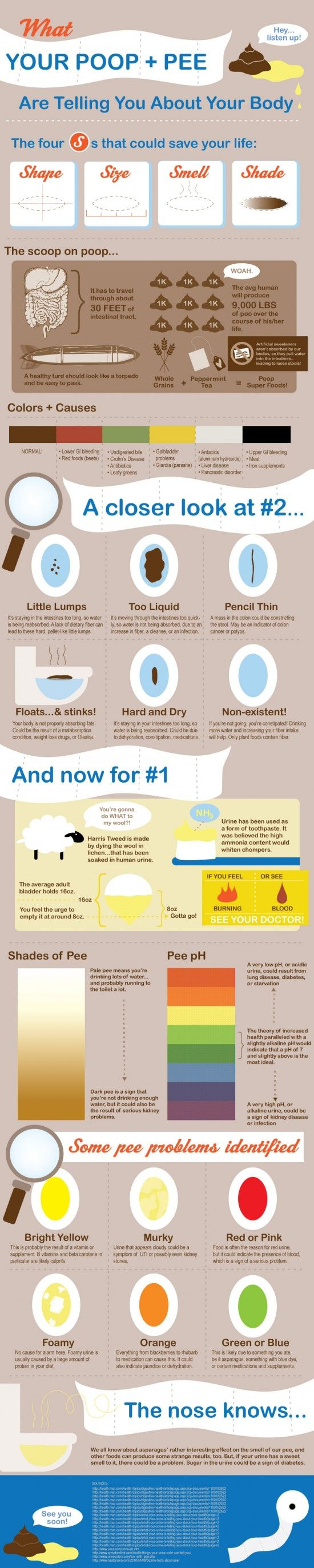 """Have you ever wondered if your poop looked """"normal,"""" but were too embarrassed to ask anyone else what their poop looks like? Poop is an important part of health and affects your beauty, as everything in your body works as an interrelated system. Well don't worry, because here is a guide to anything and everything you may have wondered about your pee, and yes, your poop."""