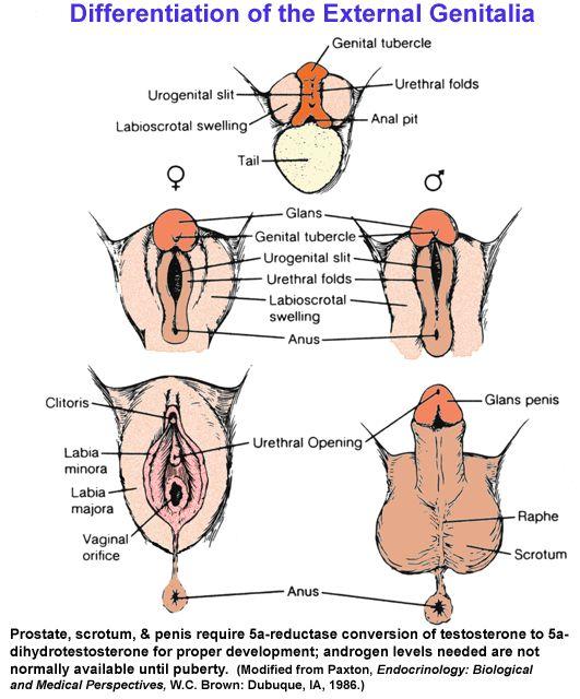 152 Best Sex Determination Images On Pinterest -6455