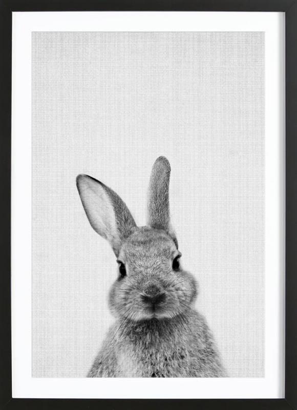 Rabbit Easter Animals Black And White Photographs Baby Animals