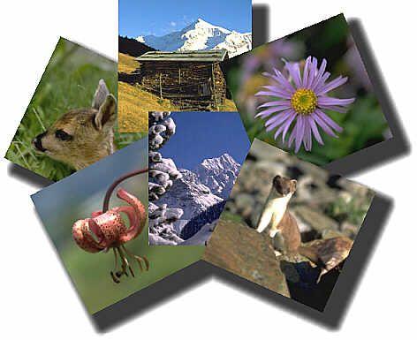 Parchi naturali Italia dove praticare la Fotografia naturalistica