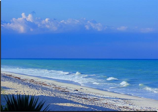 Dolpin And Manatee Tour Cocoa Beach Fl