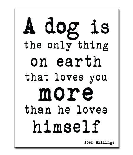 <3Love Your Friends, Doggie Quotes, Puppies, Inspiration, Dogs, Pets, Love Animal Quotes, So True, What Is A Friends