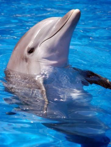 Swim with dolphins again!!