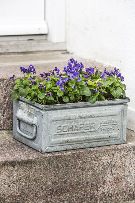 What a cool way to re-purpose an everyday item into something even more beautiful! purple posies in upcycled galvanized planter