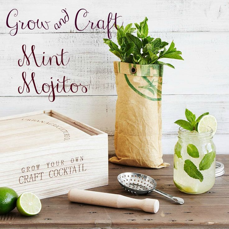 The Grow Craft Mint Mojito Kit Is So Much Fun This Tipsy Gardening Kit Will Help You Mix The Freshest Mint Mojito Cocktail Enthusiast Mint Mojito Mojito Kit