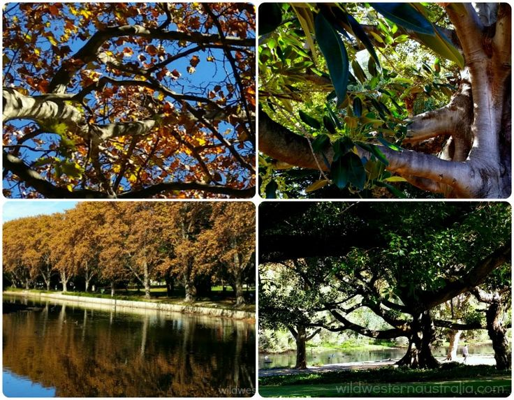 Hyde Park, a peaceful green retreat from the inner city of Perth.