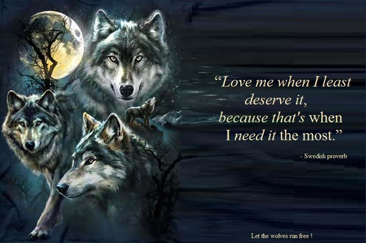 17 best images about wolves quotes on pinterest wolves