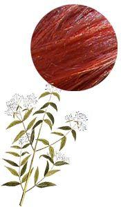 Coloration & Soin capillaire Henné rouge du Yémen Aroma-Zone