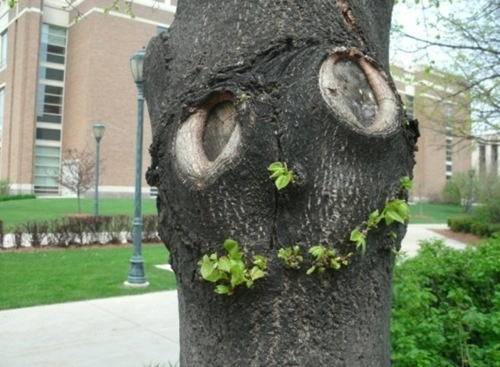 What do you see first in this picture - the tree or the face? Great example of…